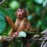 Místa, kde žije nejspíše více zvířat, než lidí: Borneo a Tasmánie